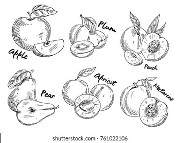 Sketches of fruits. Set of isolated sweet plum and vegan pear, vegetarian apple and sliced apricot, healthy nectarine. Botany and floral, agriculture and nutrition, garden and nature theme