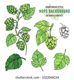 Sketches of hop plant, hop on a branch with leaves in engraving style. Hops set in color. Humulus lupulus illustration for packing, pattern, beer illustration.
