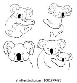Sketches of koalas on white background. Line arts of koalas.