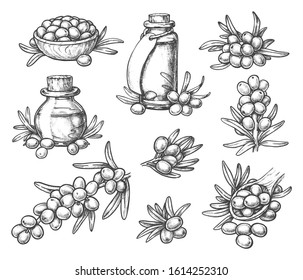 Sketches of sea buckthorn berry on branches, glassware bottle for sea-buckthorn skincare liquid, sandthorn or sallowthorn, hand drawn seaberry stem or twig, seabuckthorn plant. Organic fruit