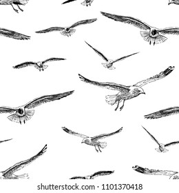 Sketches of seagulls in flight