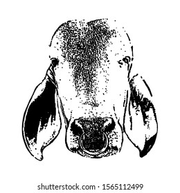 Sketching vector. The cattle face. Black and white drawing. Silhouette illustration vector.