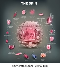 Skin anatomy structure in the round shape, detailed illustration. Beautiful bright colors.