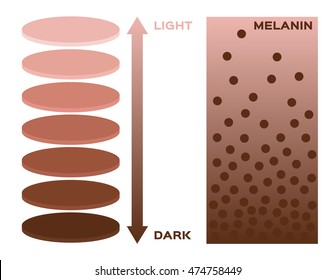 skin color and melanin  index , infographic vector . 3 chart . dark to light