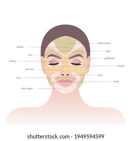 Skin health. Areas on the face and main biological points. The areas of the face are responsible for the internal organs. Signs of various diseases on the face. Close-up of the girl's face.