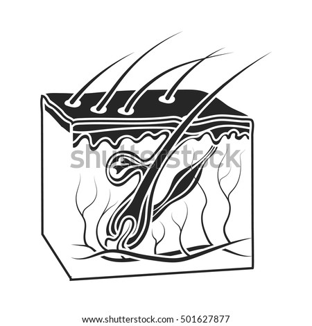 Skin Icon Black Style Isolated On Vector de stock501627877: Shutterstock
