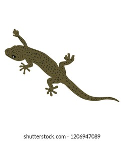 Skink reptile is on of lizard types