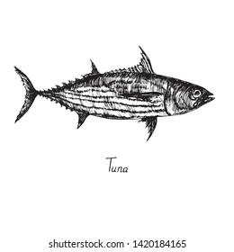 Skipjack tuna (balaya, aku, arctic bonito, mushmouth, oceanic bonito, striped tuna, victor fish) with inscription, hand drawn doodle sketch, isolated vector outline illustration