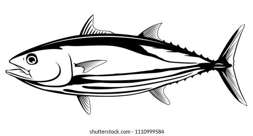striped bonito images stock photos vectors shutterstock https www shutterstock com image vector skipjack tuna black white fish 1110999584