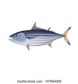 Skipjack tuna. Vector illustration isolated on the white background