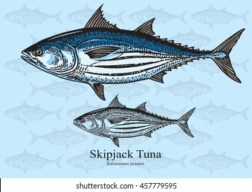 Skipjack Tuna. Vector illustration with refined details and optimized stroke that allows the image to be used in small sizes (in packaging design, decoration, educational graphics, etc.)