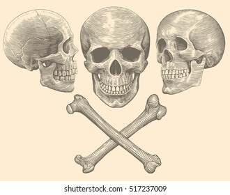 Skull and Bones. Hand drawn engraving. Vector vintage illustration. Isolated on color background. 8 EPS