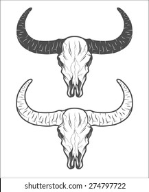 The skull of a buffalo. The two versions.