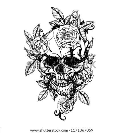 Skull Centifolia Roses Tattoo By Hand Stock Vector Royalty Free