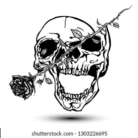 Skull cut in two by a rose. Hand drawn vector illustration in tattoo style.