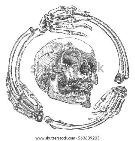 Skull Frame Made Hands Bones Occult Stock Vector (Royalty Free ...