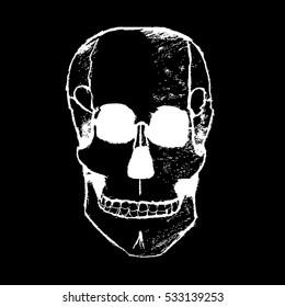 d680bd14a391 Skull vector illustration.