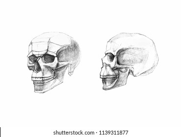 Skull in profile and side view. Pencil drawing isolated on white background.  Body anatomy, medical illustration.