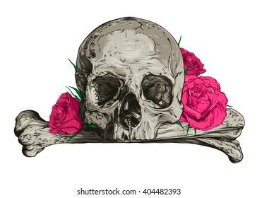 Skull and roses. Vector illustration