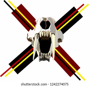 skull of a saber-toothed tiger. open mouth