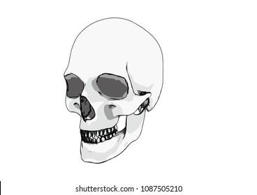 ec9988b146eb skull sketch vector