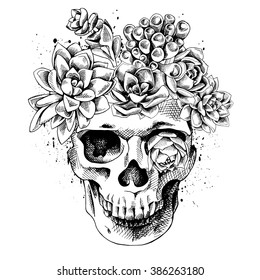 Skull with the succulent plants. Vector illustration.