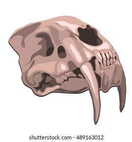 Skull tiger isolated on white background. Vector illustration.