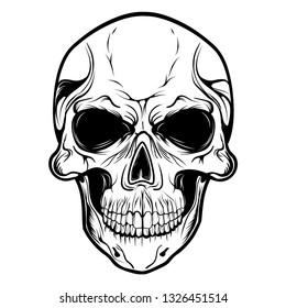 Skull Vector Head  Face