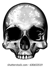 Skull in a vintage retro hand drawn woodcut etched or engraved style