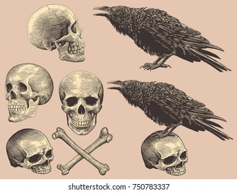 Skulls, bones and crows. Design set. Hand drawn engraving. Vector vintage illustration. Isolated on color background. 8 EPS