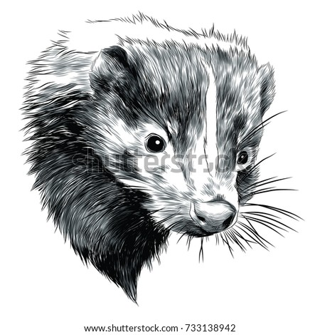 Skunk Sketch Head Vector Graphics Blackandwhite Stock Vektorgrafik