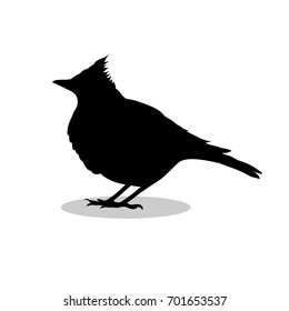 Skylark lark bird black silhouette animal. Vector Illustrator.