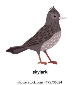Skylark vector illustration