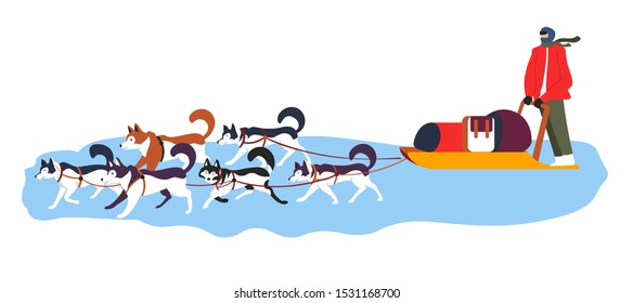 Sled dog team in action. Dogs sledding in north, recreational and racing winter transport with huskies and driver in full sport gear. Flat vector illustration on white background.