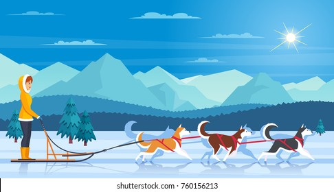 Sleddog huskies with mountains trees sun and musher flat vector illustration