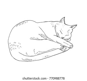 Sleeping cat, monochrome sketch
