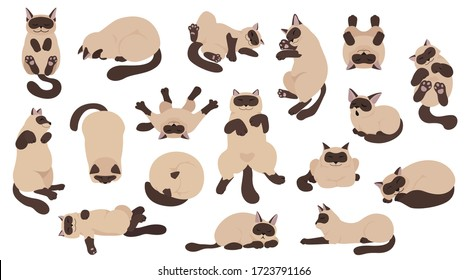 cat poses images stock photos  vectors  shutterstock