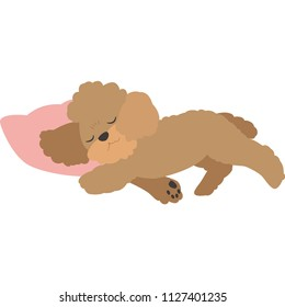 Sleeping dogs (toy poodle)