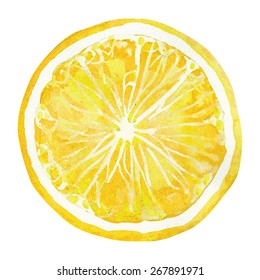 slice of lemon,  watercolor vector illustration