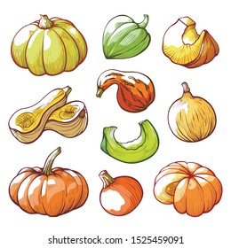 Sliced and whole pumpkins hand drawn vector illustrations set. Ripe gourds drawings collection. Traditional Halloween vegetables isolated on white background. Autumn harvest concept