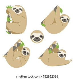 The sloth is hanging on a branch with leaves. A set of four color vector images of different animal poses and the image of the head. Simple flat style, transparent background.