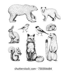 Small animals drawings set on white background with hare, fox, hedgehog, bear, squirrel, ermine, birds and arctic fox.