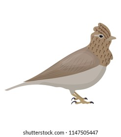 Small bird in brown color with pointed head known as skylark