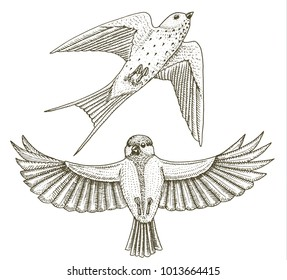 Titmouse Flying Stock Illustrations Images Amp Vectors