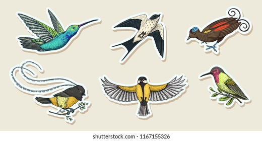 Small birds of paradise stickers. Wilson s and King of Saxony in New Guinea. Exotic tropical animal icons. Use for wedding, party. engraved hand drawn in old sketch.
