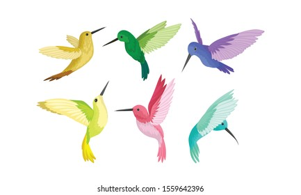 Small Bright Colorful Hummingbirds Flying And Sitting Vector Illustration Set