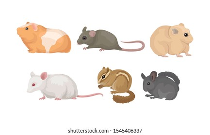 Small Gnawing Animals Vector Set Isolated On White Background