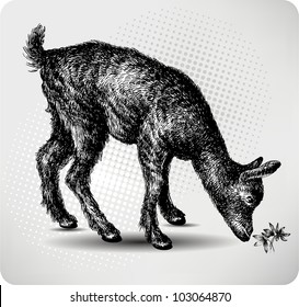 Small goat in the pasture, hand drawing, vector illustration.
