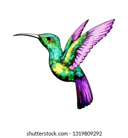 Small hummingbird. Rufous and White-necked Jacobin bird. Exotic tropical colibri animal element, icon or label. Golden and emerald feathers. Use for wedding, party. Engraved hand drawn as old sketch.