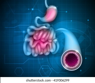 Small intestine and stomach on an abstract blue background